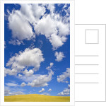 Beautiful Cumulus Clouds and Golden Prairie by Corbis