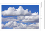 Cumulus Clouds Floating in Clear Blue Sky in Fall by Corbis