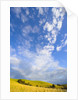 Rolling Hills and Dramatic Cumulus Clouds by Corbis