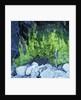 Algae Growing on Rock Cliff by Corbis