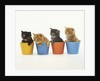 Four Kittens in Plastic Cups by Corbis