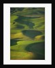 Green Hills by Corbis