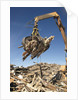 Construction Waste Being Sorted for Recycling by Corbis