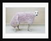 Greyhound Wearing a Pink Rug by Corbis