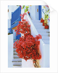 Flowers Blooming on Stairway by Corbis