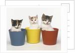 Kittens in Flower Pots by Corbis