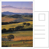 Val d'Orcia by Corbis