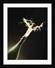 Exploding Champagne by Corbis