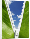 Green Futures by Corbis