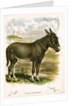 Illustration of Donkey by Corbis