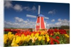Windmill in Tulip Field by Corbis