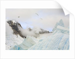 Gulls Flying Above Stranded Icebergs at Boothe Island by Corbis