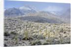 Sonoran Desert in winter by Corbis