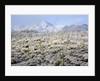 Winter in the Sonoran Desert by Corbis