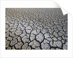 Dry Lake Bed at the Booby Pond Nature Reserve by Corbis