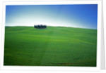 Coppice of Trees on Green Fields in Tuscany by Corbis