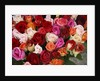 Roses for Sale at Flower Market by Corbis