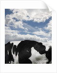 Cow and Sky Patterns by Corbis