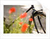 Bicycle and Flowers by Corbis
