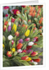Bunches of colorful tulips by Corbis
