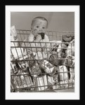 1960s Baby Sitting In Supermarket Cart Full Of Cans Eating Candy Bar With A Messy Face by Corbis