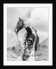 1930s Cowboy Sitting In Front Of Horse Holding Reins Spotted Paint Pinto by Corbis