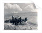 1920s 1930s Horse-Drawn Wheat Harvesting by Corbis