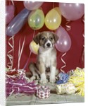 1960s Puppy Dog Balloons Party And Colorful Streamers by Corbis