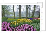 Spring Flowers in Flower Garden by Corbis