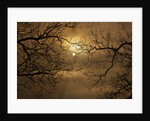Branches Surrounding Harvest Moon by Corbis