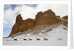 American Quarter Horses in Big Horn Mountains of Wyoming by Corbis