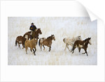 Cowboy Herding Horses at Hide Out Ranch in Wyoming by Corbis