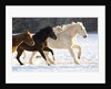 Draft Horse Running With Quarter Horses in Snow by Corbis