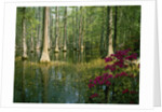 Cypress Gardens in South Carolina by Corbis