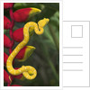 Eyelash Viper Snake on Heliconia Flower by Corbis
