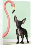 Chihuahua next to pink flamingo by Corbis