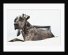 Great Dane on bed by Corbis