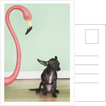Chihuahua next to a pink flamingo by Corbis