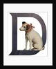 D Is For Dog Illustration by Corbis
