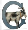 G Is For Goat Illustration by Corbis