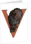 V Is For Vulture Illustration by Corbis