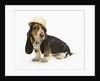 Basset Hound Puppy Wearing a Safari Hat by Corbis