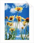 Wildflowers by Corbis