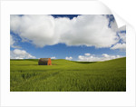Old Red Barn in Spring Wheat Fields by Corbis