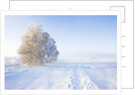 Frost and First Snow on Meadow by Corbis