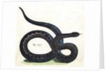 The Viper Illustration by Corbis