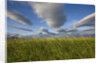 Coastal Meadow at Hallo Bay in Katmai National Park by Corbis