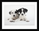 Two Puppies by Corbis