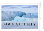 Emperor penguin group with iceberg by Corbis