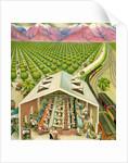 Illustration of California Orange Grove by C.H. DeWitt